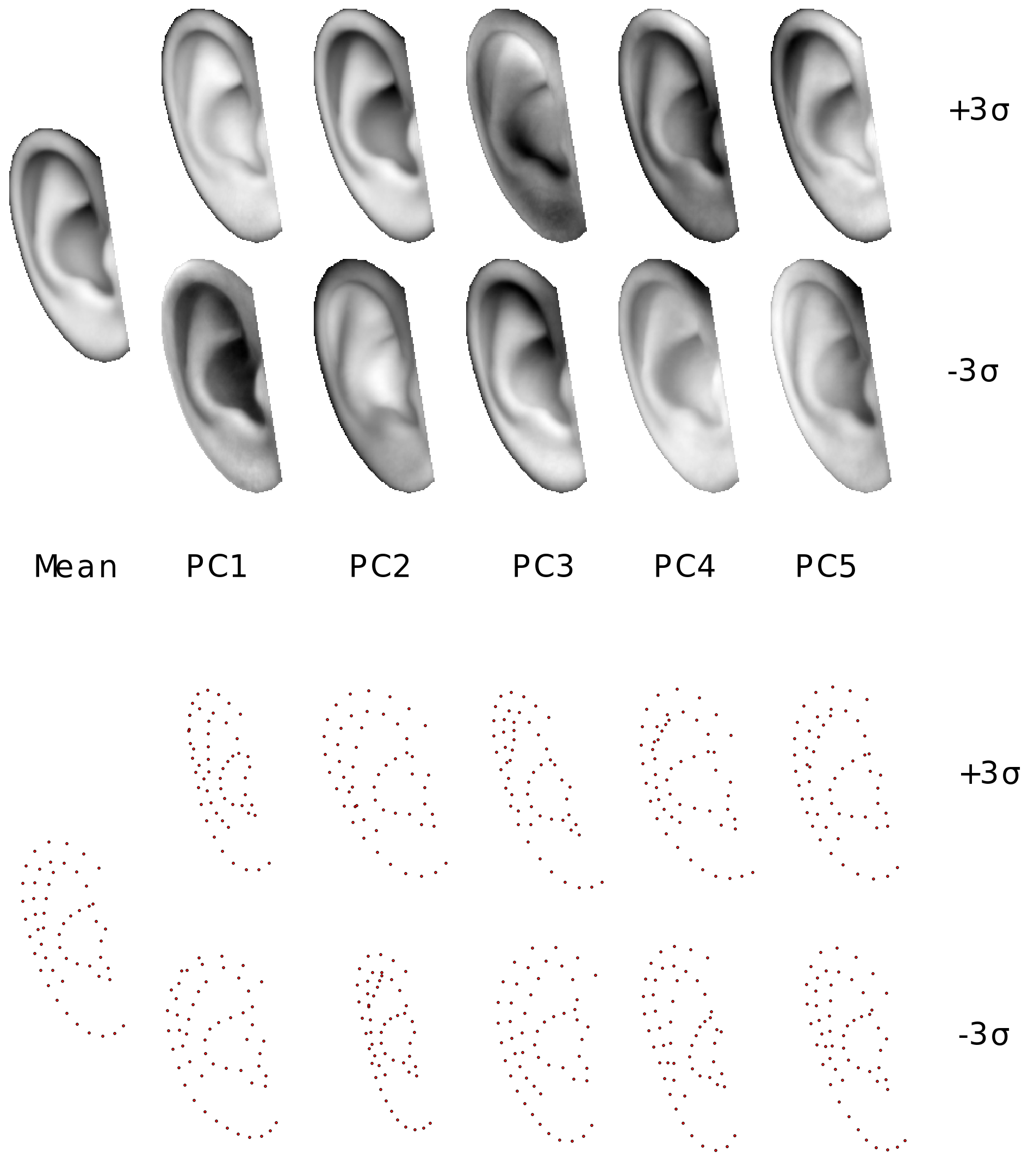 Ibug Resources Deformable Models Of Ears In The Wild For Behavioral State Machines Are Used Active Objects Other Words Fig 1 Exemplar Statistical Shape And Appearance Model Human Ear Figure Visualises First Five Principal Components Variation Both